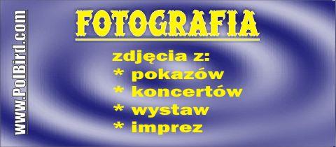 Usługi fotograficzne